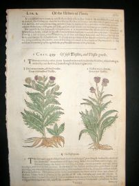 Gerards Herbal 1633 Hand Col Botanical Print. Soft Thistle, Cirsium